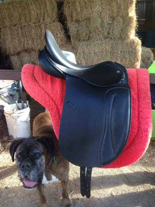 Collegiate Dressage 17in Black saddle