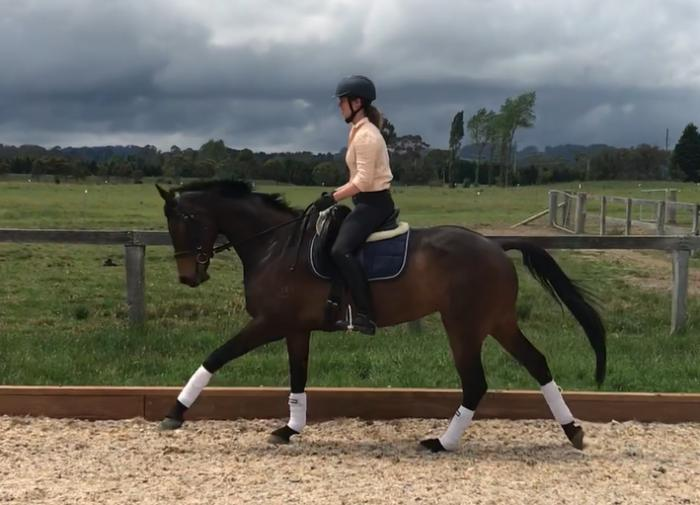 Pretty, Quiet, Uncomplicated Warmblood