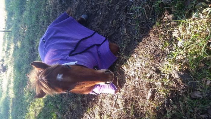 Genuine kids farm pony