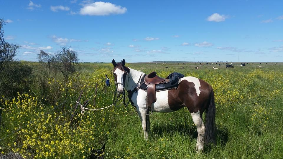 Great workhorse, fast barrel/sporting horse