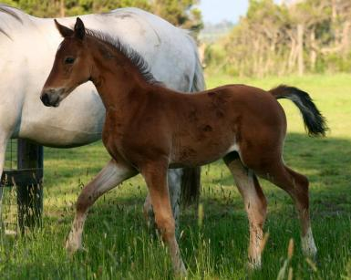 Her weanling filly
