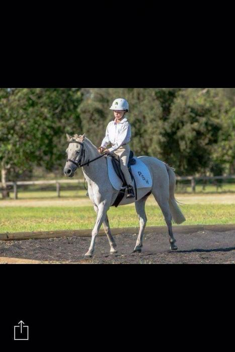 Pretty Pony Mare