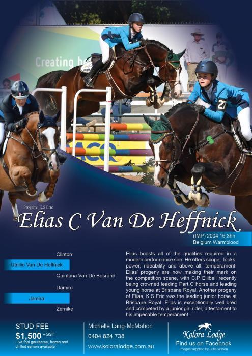 Elias C Van De Heffnick - Standing at Stud