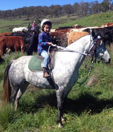 Great quiet kids pony