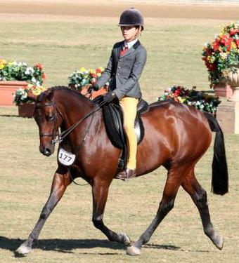 Grand National Top 10 Show Hunter Galloway