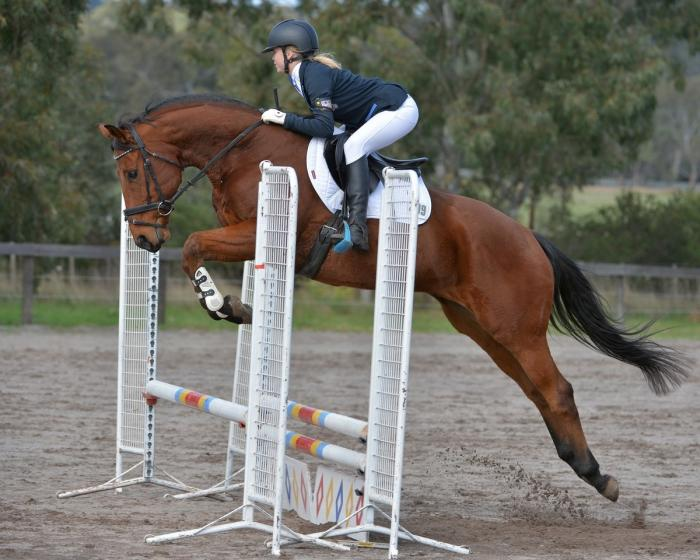 Competitive Eventer/Allrounder