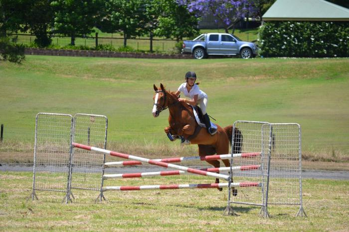 Talented Competitive Showjumper