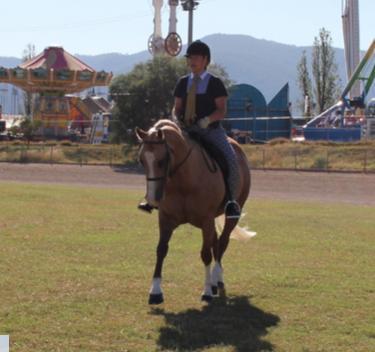 ***12yr Palomino Quarter horse***