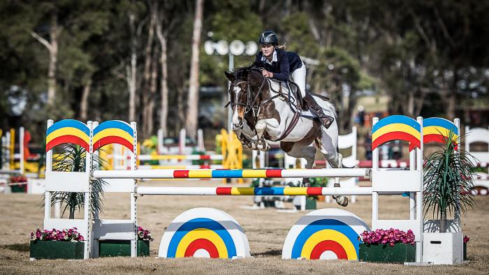 Talented, Reliable Show Jumper