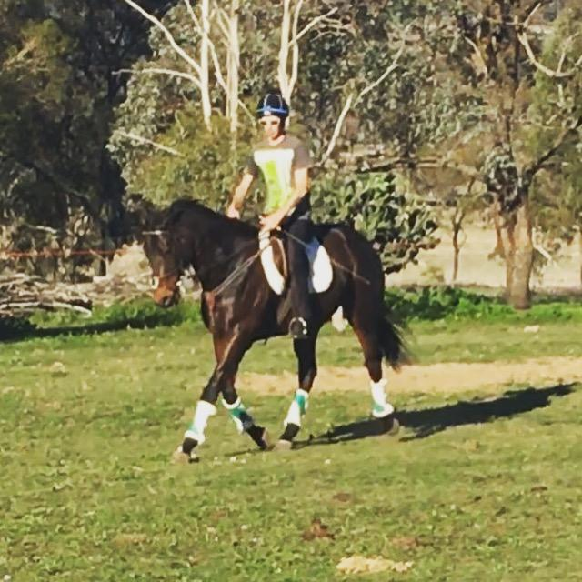 Stunning Confidence Booster/Eventer