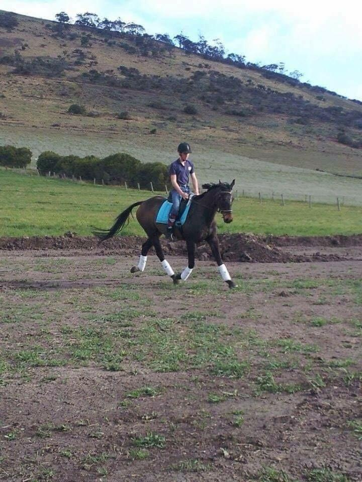 Price Reduced - Lovely Gelding