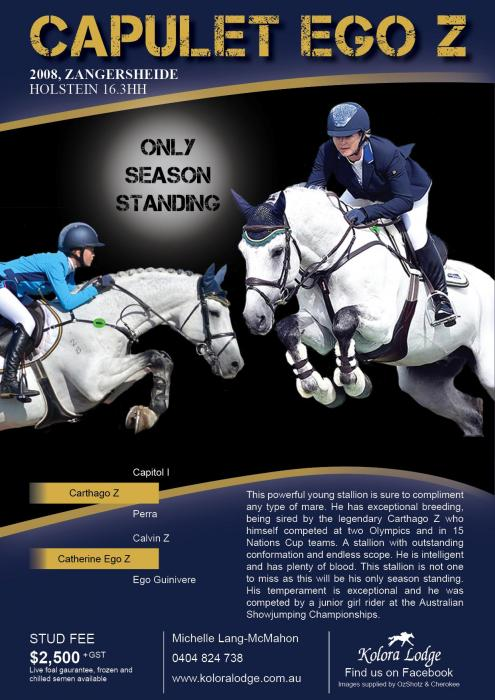 Capulet Ego Z - Standing at Stud this season only