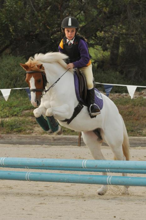 Super Talented Pinto Pony