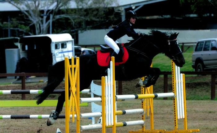 Ultimate Showjumping/Eventing Schoolmaster