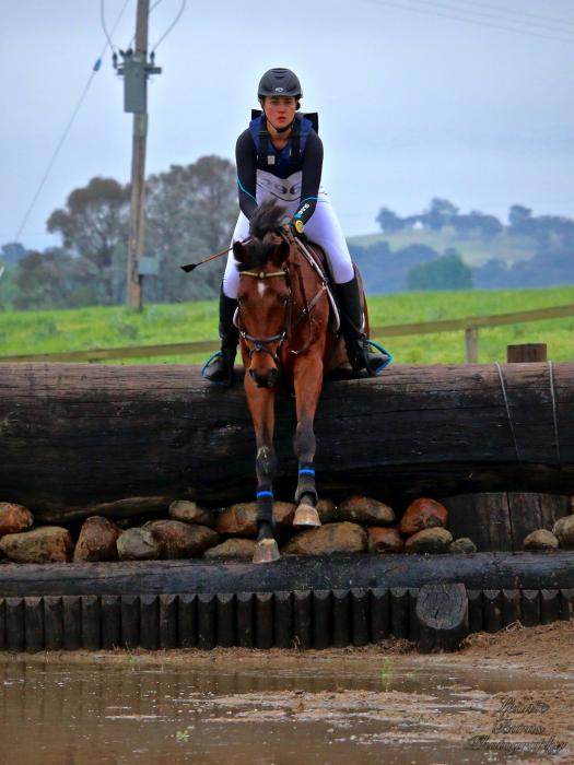 1* Eventer, 125cm Showjumper