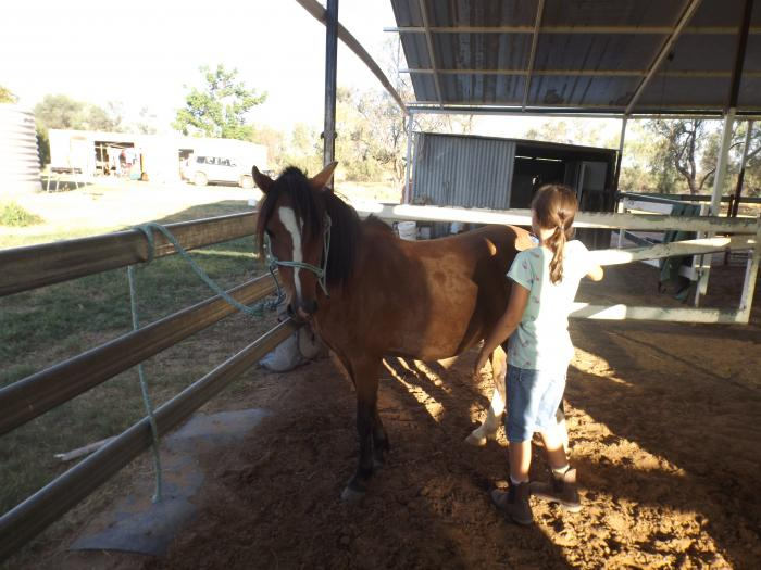 Part Welsh Pony Mare Price Reduced