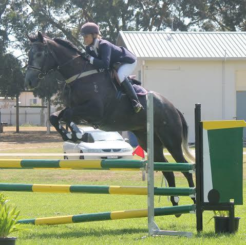 Exceptionally quiet,super easy,mature young horse