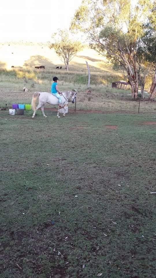 7yo Arabian mare