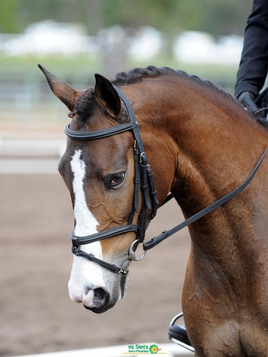 Beautiful Dressage Mare!