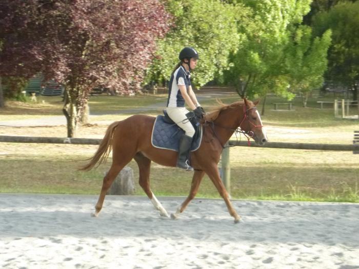 ATTRACTIVE YOUNG GELDING WITH UNLIMITED POTENTIAL