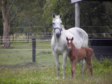Chloe and foal Rosalie - taken just over a year ago
