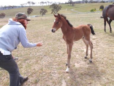 Tommy - foal