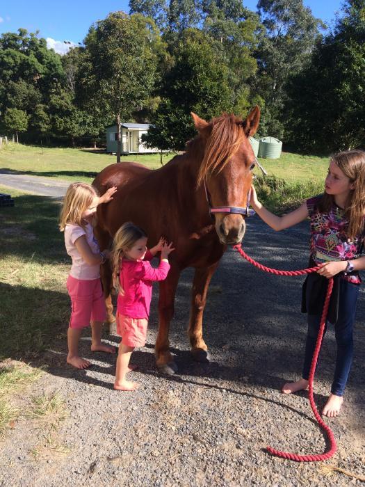perfect ponyclub mount