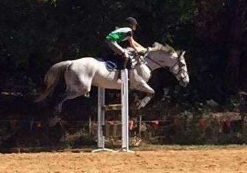 Excellent show jumper, competitive all rounder