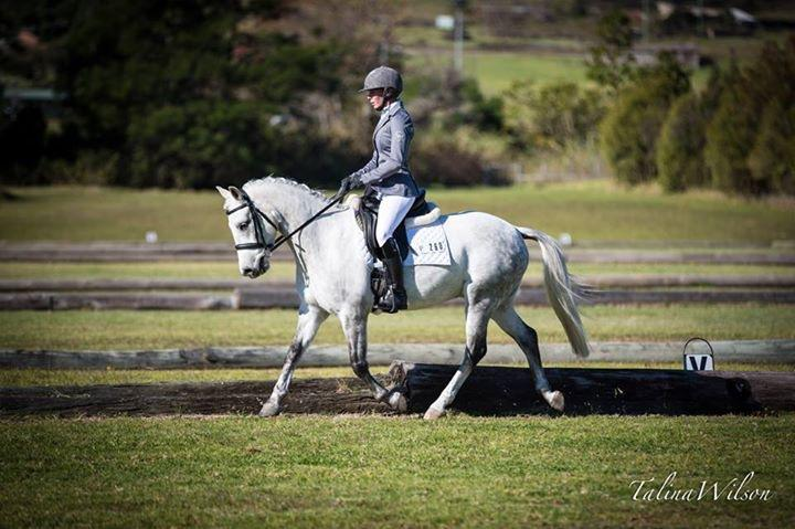 Professionally Trained Dressage Pony Offered for Sale