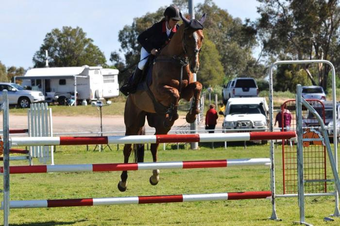 Experienced Showjumper alrounder