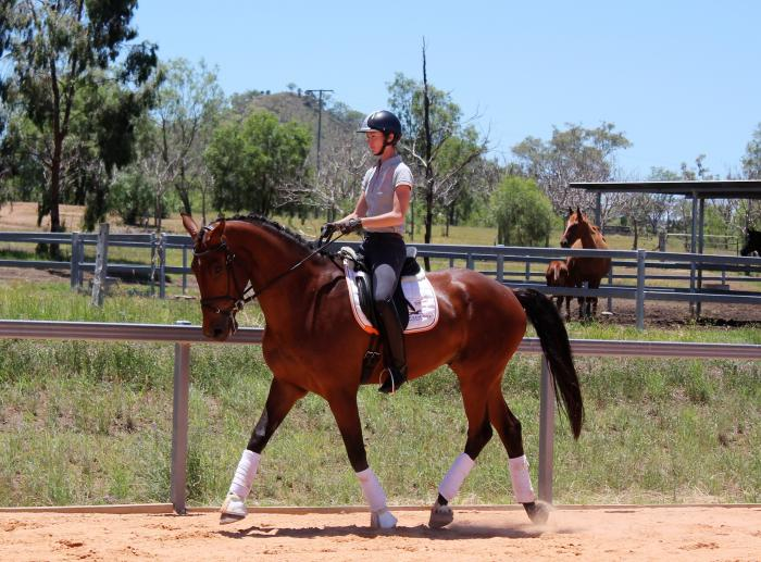 Medium Trained Gelding with Tempi Changes