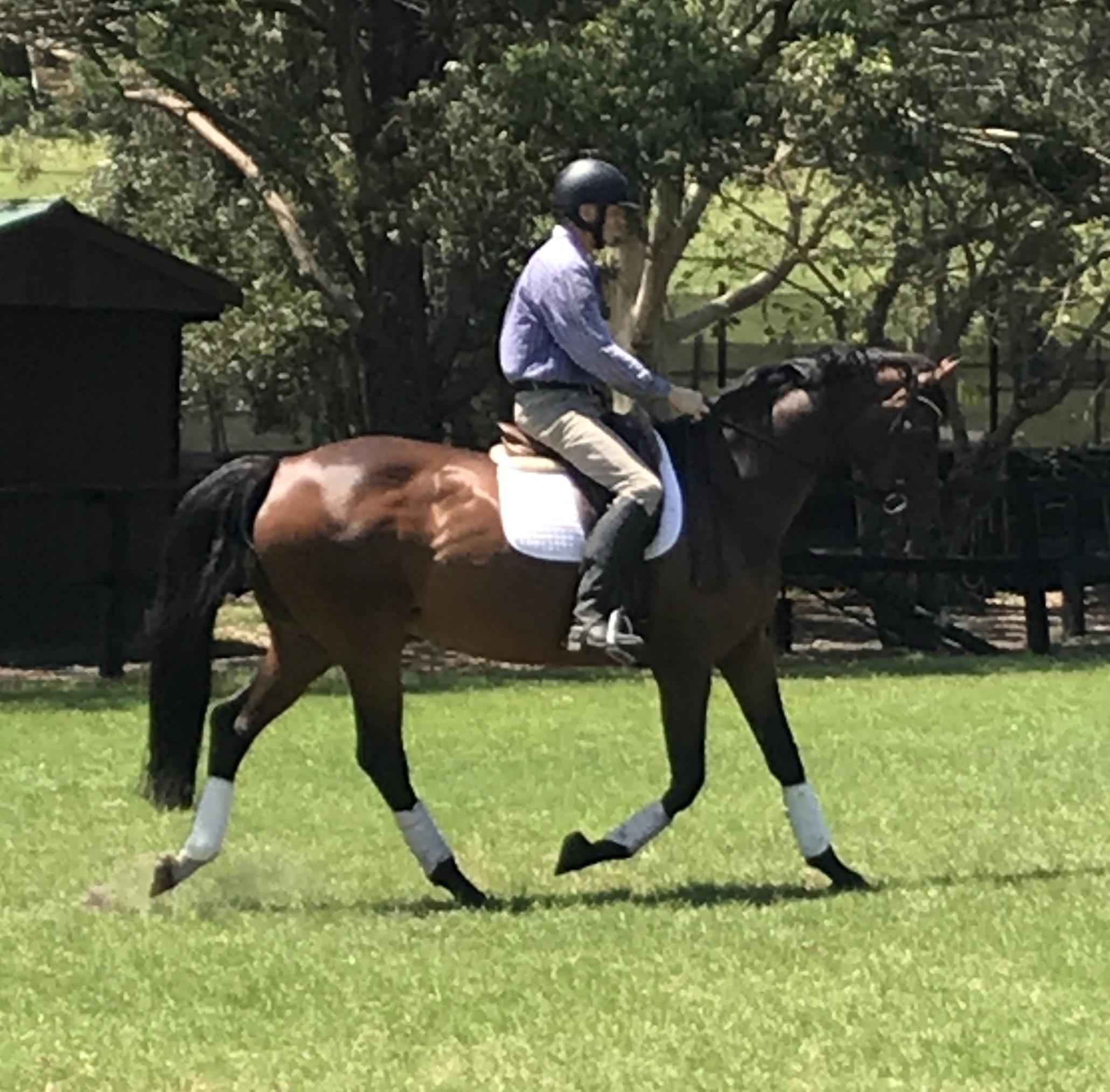 Stunning Broodmare or Riding Horse