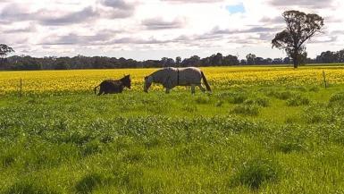 Rodeo & Donkey Enjoy a fresh Paddock