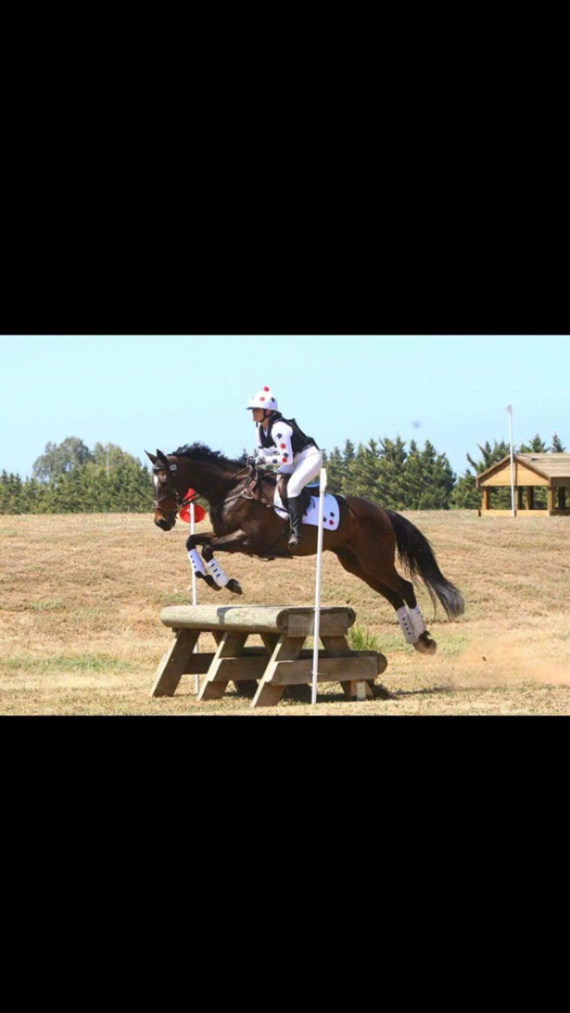 WELL EDUCATED GELDING