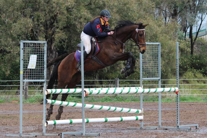 Experienced Interschool/Showjumping Mount