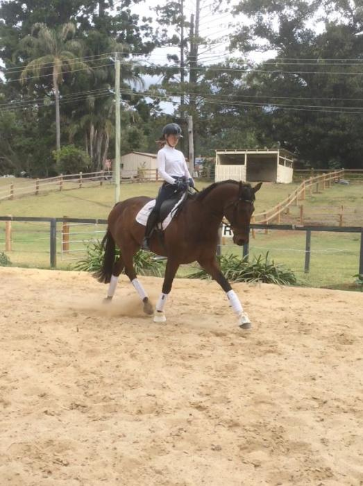 Educated dressage thoroughbred