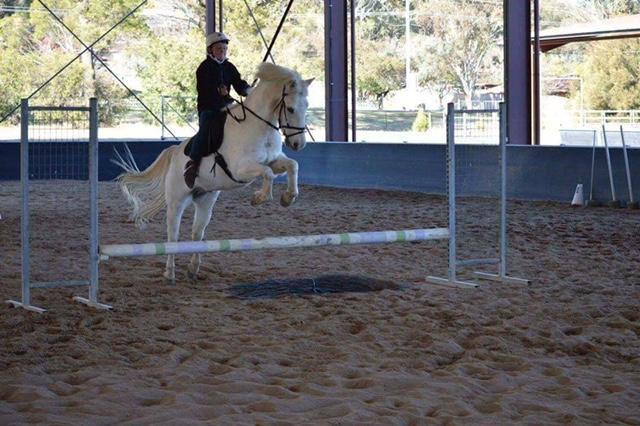School Master Kids Pony Club Dressage Pony