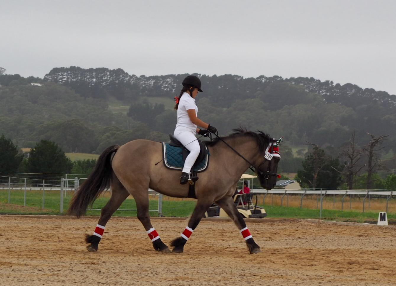 Super fun & safe all rounder Highland Pony