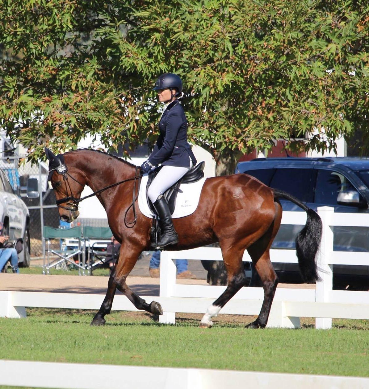 MASSIVE PRICE REDUCTION - Eventer/Showjumper Mare