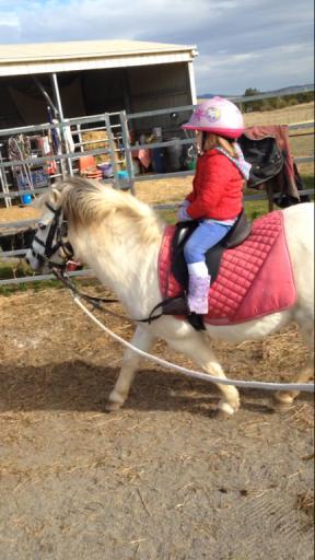 Beautiful kids pony/ harness pony