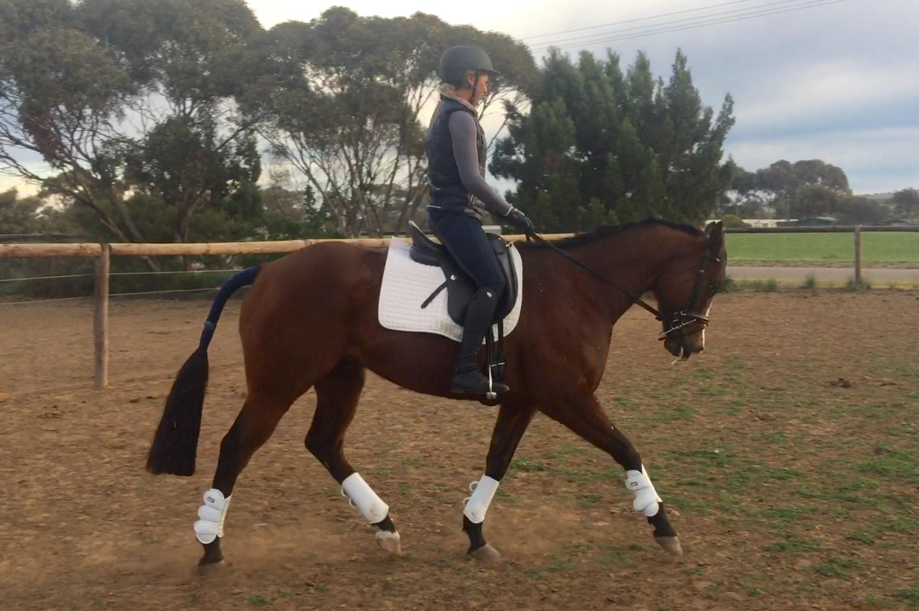 **Quality off the track gelding**