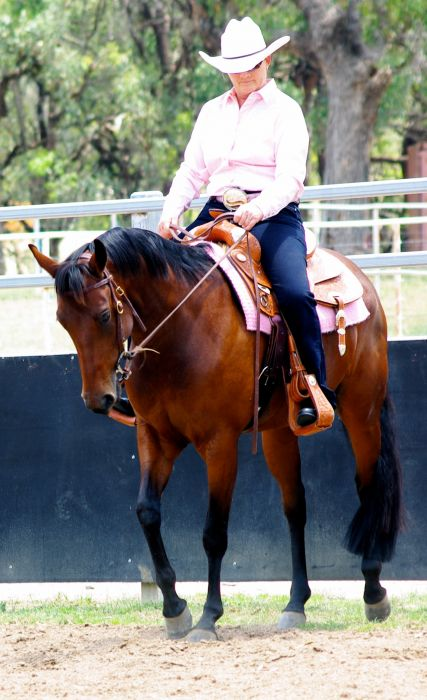 Stunning Bay Mare - Western or English Riding
