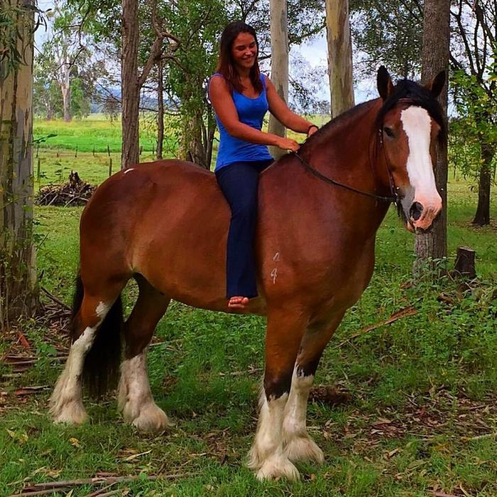 Belgian Draft x Clydesdale