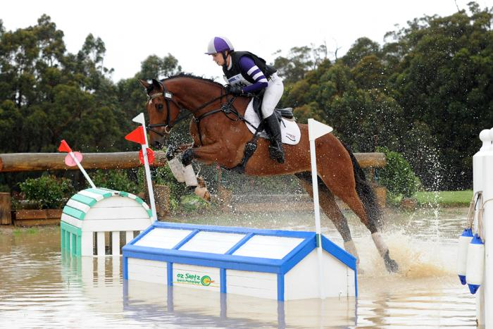 Talented Eventer/Showjumping Prospect