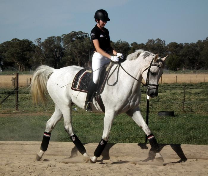 Arabian Horses For Sale - Arabian Horse » Horsezone - Page 1