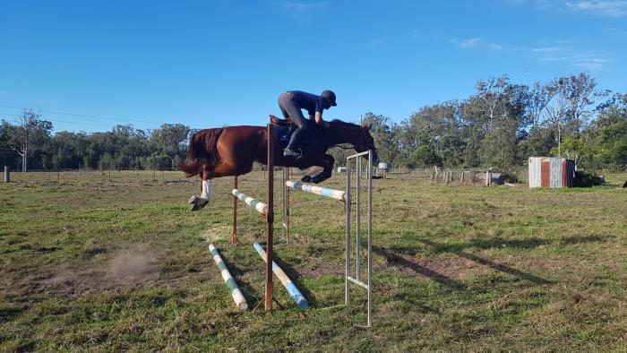 Adorabella - Talented 6yo Sport Horse