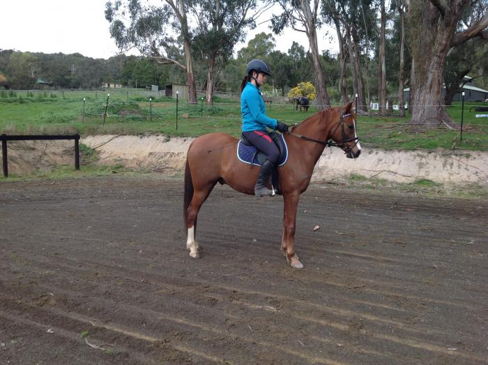 Fantasic interschool/dressage prospect