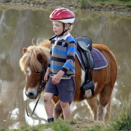 Amazing Shetland Pony Dotty
