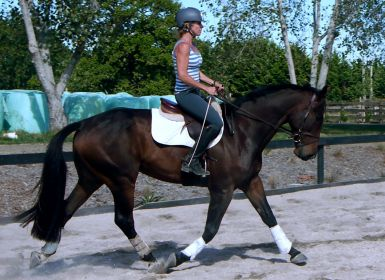 16.3hh by Mighty Heights