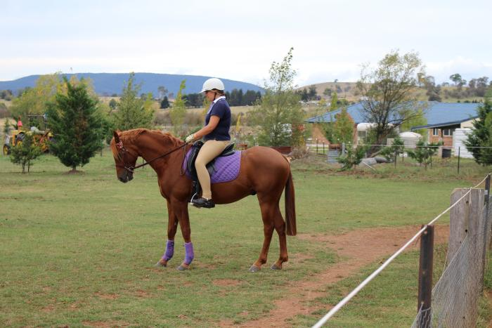 Beautiful Willowcroft riding pony 14.2hh